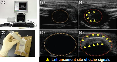 Fig. 4. Ultrasonographic Images of Heart and Urinary Bladder with Bubble Liposomes
